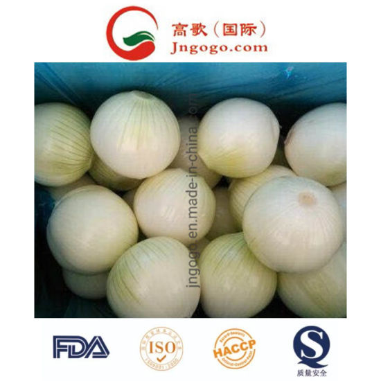 New Crhigh Quality Chinese Pure White Onion(5.0cm and up) pictures & photos