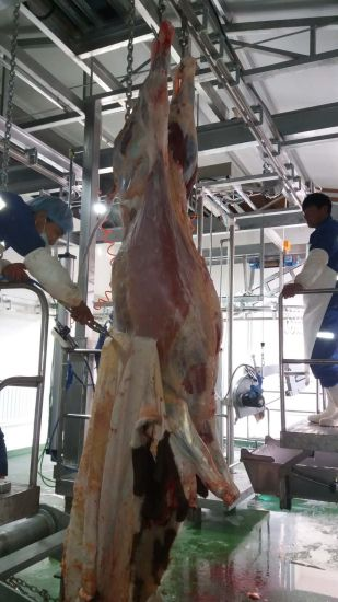 China New Design Cattle Beef Slaughter Line