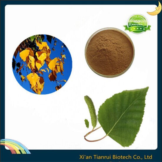 Factory Supply 100% Pure Natural Birch Leaf Extract Powder 7%