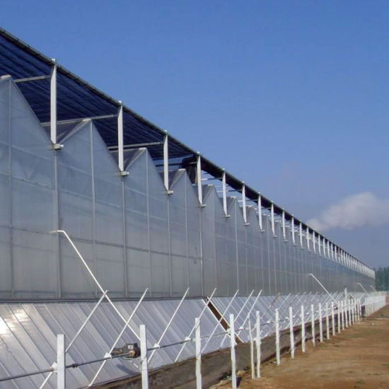 Venlo PC Sheet Greenhouse for Commercial with Hydroponic Nft Systems