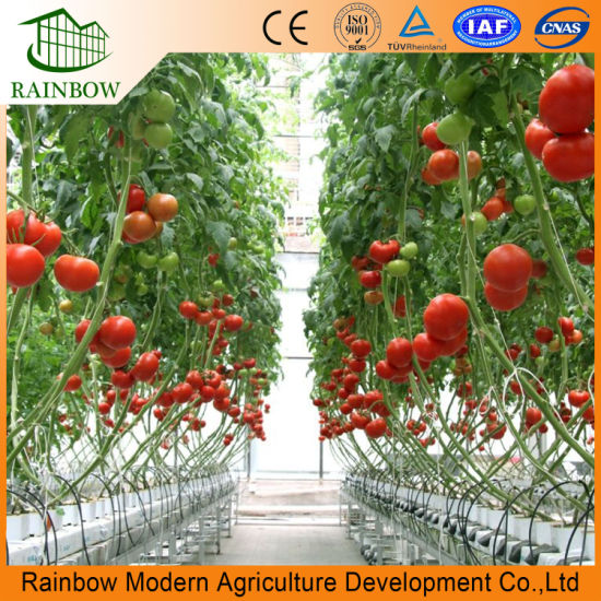 Multi-Span Greenhouse with Fertilizer Soilless Culture Hydroponic Planting  Sponge