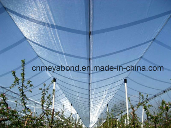 Agricultural 100% Virgin HDPE Transparent Color Anti Hail Net pictures & photos