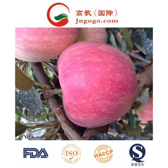 Chinese Fresh Red Star Apple