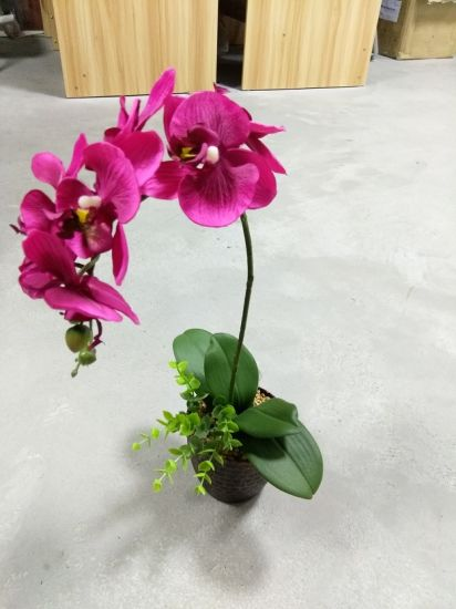 Best Selling 1 Head Orchid Flower Gu-Jy902123927 pictures & photos