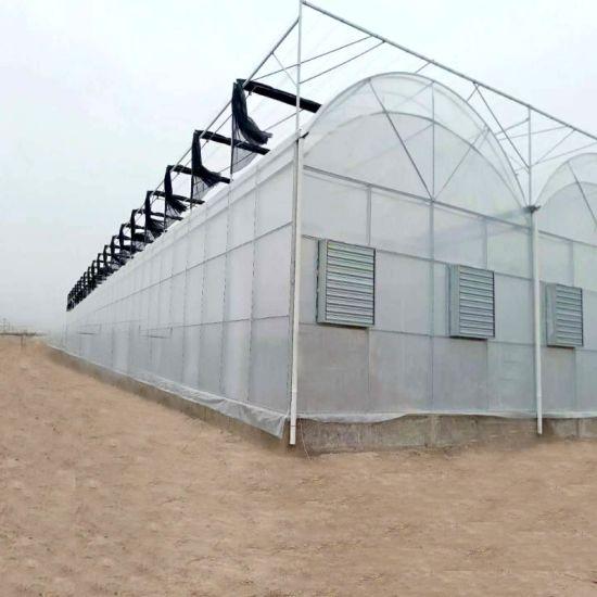 Customized UV Resistant Plastic Film Greenhouse Used for Flowers Ganden