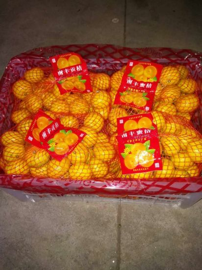 Chinese Nanfeng Small Sweet Baby Mandarin