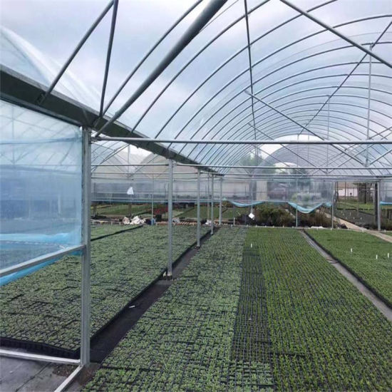 China Agriculture Single-Span Po Film Greenhouse with Steel Frame and Hydroponic System for
