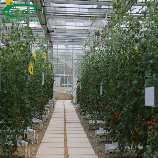 Commercial NFT substrate hydroponics system for greenhouse tomato growing