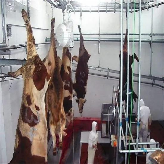 Cattel Slaughter Line--Dehiding