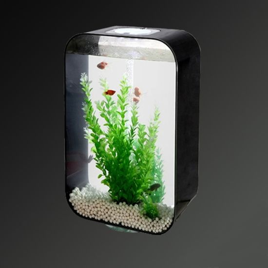 Customized Colorful Acrylic Fish Tank with LED Light pictures & photos