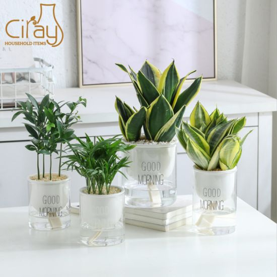 China Hot Sale Indoor Self Watering Decorative Plant Pot Clear Glass Flower Pot China Plant Pot And Ceramic Plant Pot Price