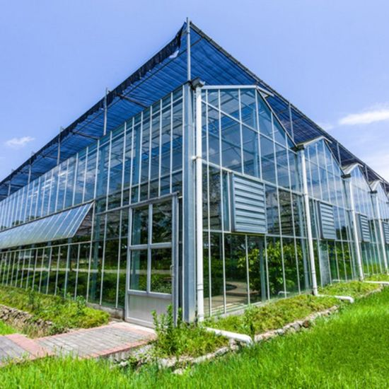 Muti Purpose Venlo Glass Greenhouse for Flower Vegetable Planting