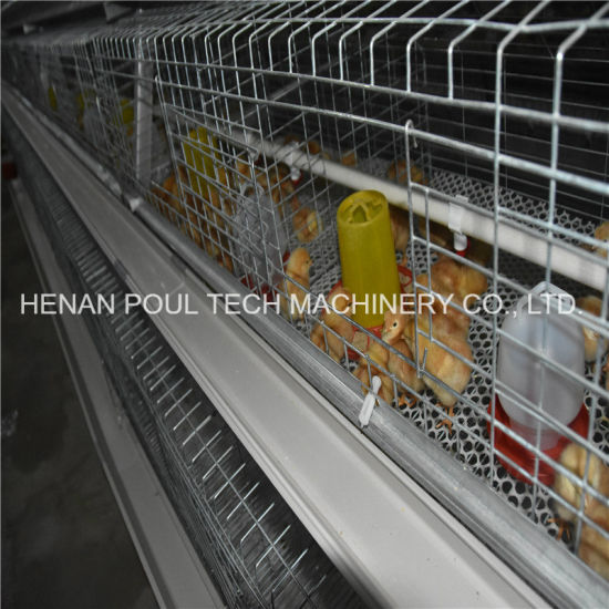 a Type Pullet Chicken Cage Equipment with Automatic Poultry Feeding and  Drinking System