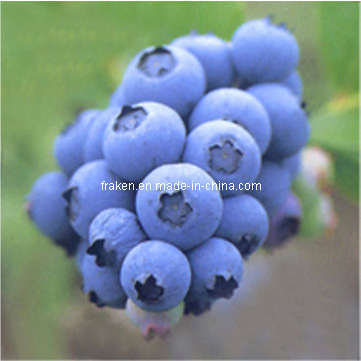 Mulberry Extract, Blueberry Extract, Cranberry Extract & Bilberry Extract pictures & photos