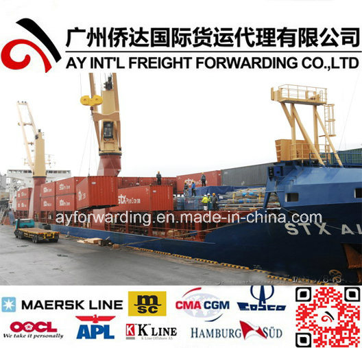 Reliable Shipping Agent From China to Iraq pictures & photos