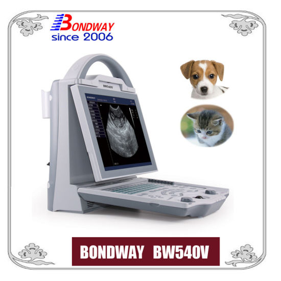 Digital Veterinary Ultrasound Scanner for Small Animals, Companion Animals, Vet Ultrasound