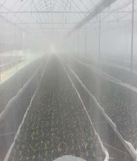 Poultry House Equipment Mist Spray Foggy System for Poultry House