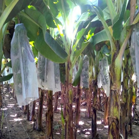 UV Protection Nonwoven Banana Bags pictures & photos