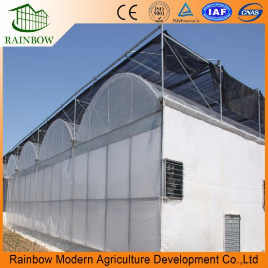 Brand New PE Poly Film Greenhouse for Plant