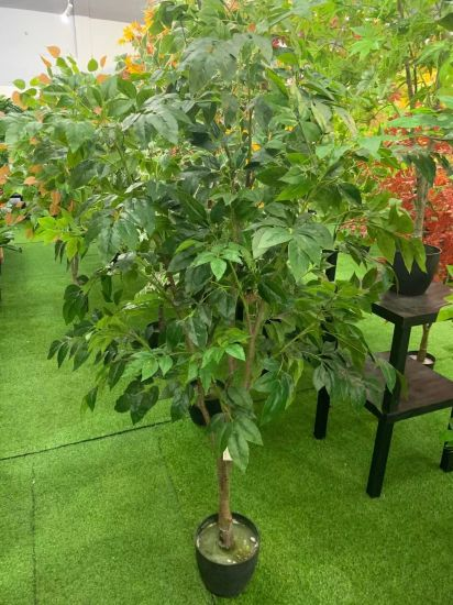 Plants In Nursery Pot Trees