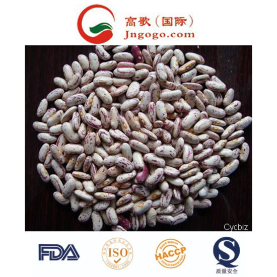 China New Crop Good Quality Light Speckled Kidney Beans China Bean Kidney Bean