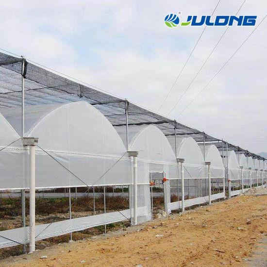 Multi-Span Agricultural Hydroponics Growing System Plastic Film Greenhouse Vertical Planting for Lettuce/Spinach/Herb