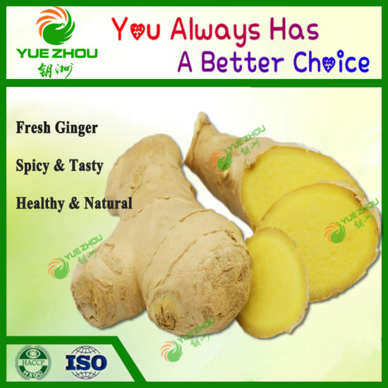 2019 Shandong New Crop Fresh Ginger with Competitive Price and Quality