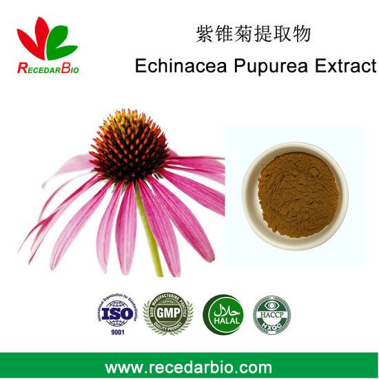 Echinacea Polyphenol Echinacoside Chicoric Acid Echinacea Purpurea Extract Powder