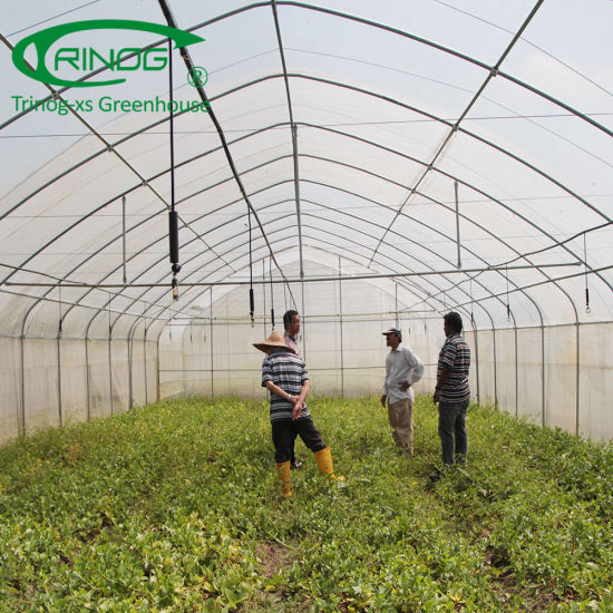 Single Tunnel Plastic Film Commercial Greenhouse for Flower Green House