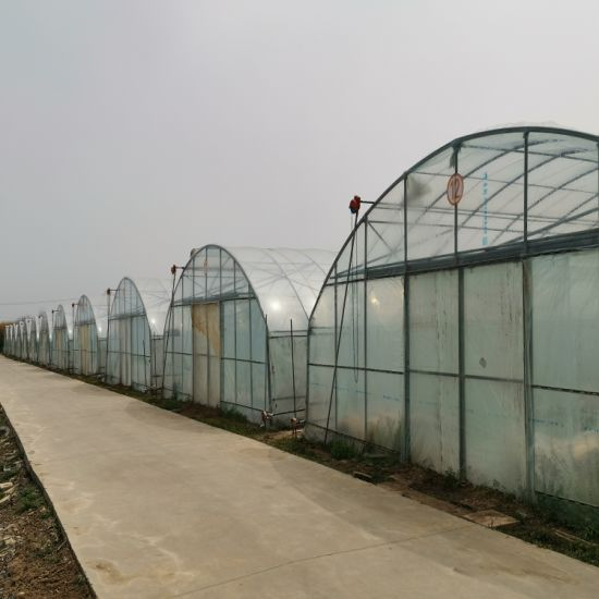 Double Layer Plastic Arch Pipes Greenhouse for Tomato