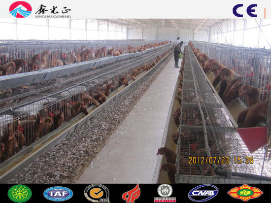 Cage Breeding Layer Hen House Checken House Poultry Shed