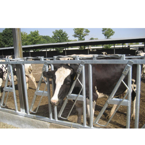 Dairy Cow Diagonal Stant Bar Feeder Barrier Panel with Locking Stanchion