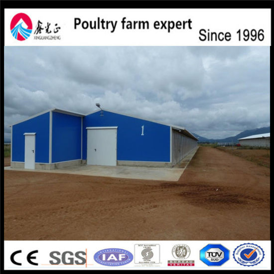 China Low Cost Steel Structure Layer Egg Chicken Broiler Poultry