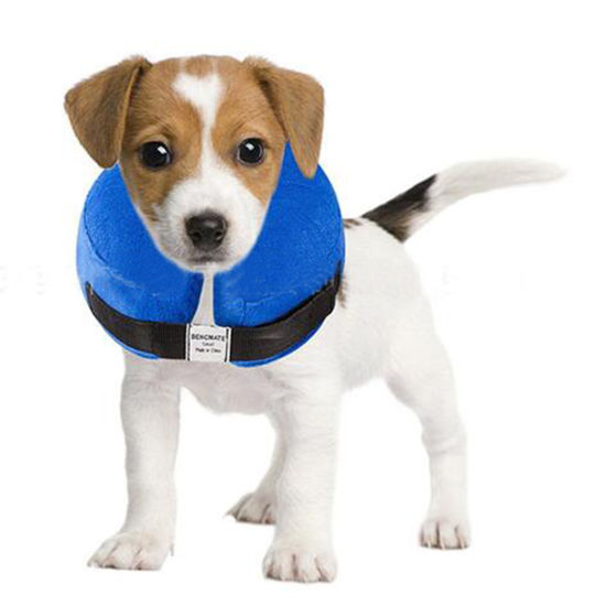 Recovery Pet Products Elizabethan Cat Inflatable Dog Collar