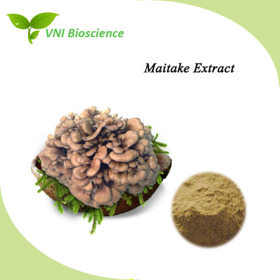 Manufacturer Supply Pure Natural Maitake Plant Extract to Improve Immunity pictures & photos