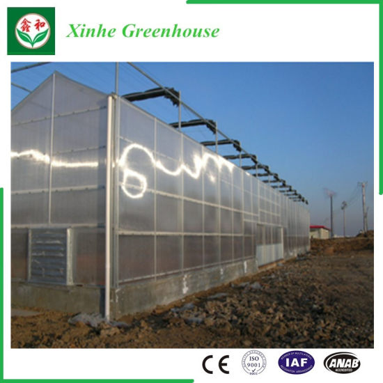Polycarbonate Green Houses Hydroponics System for Vegetables/Flowers/Fruit