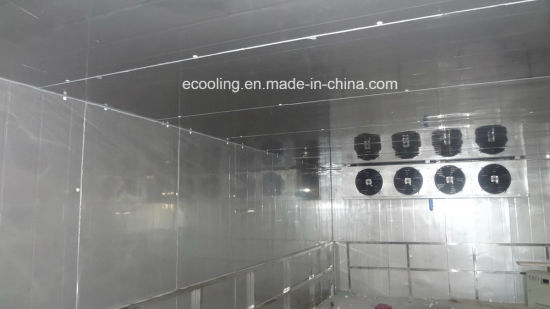 China Customized Large Size Freezing Cold Storage and Processing