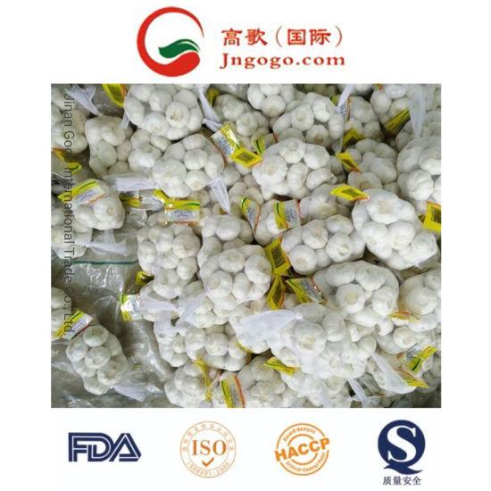 New Crop Fresh Pure White Garlic (5.5cm and up)