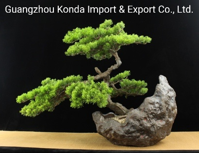 Hot Whosale Bonsai Indoor Artificial Trees and Plants