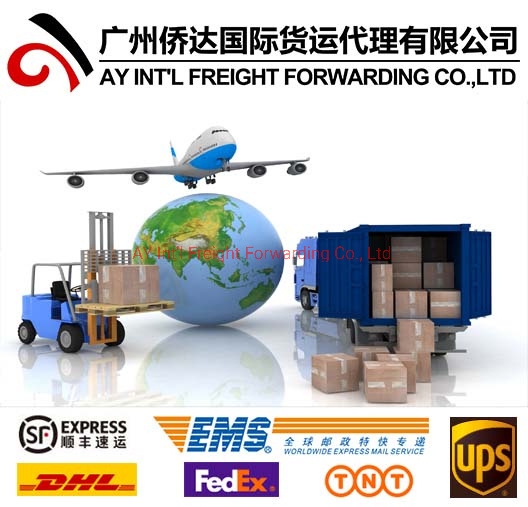 Professional Express Courier Services (DHL, TNT, UPS, FedEx, EMS, SF) From China to All Over World