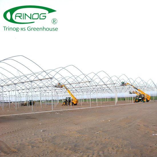 Multi-Span Agricultural film covered Flower Greenhouse for Kenya farm