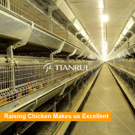 High Quality Pullet Raising Equipment with Automatic Feeding System
