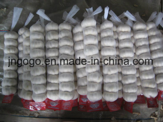 Fresh Small Bag Packing Pure White Garlic pictures & photos