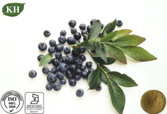 Natural Blueberry Leaf Extract 10: 1 pictures & photos