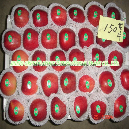 Wholesale Fresh Red Star Huaniu Apple pictures & photos