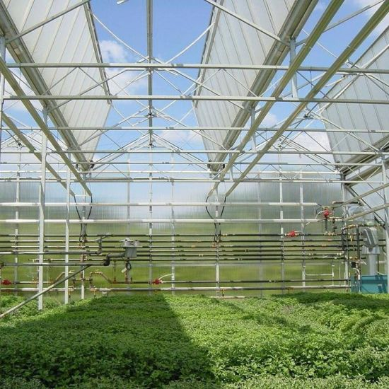 Tomato Planting Polycarbonate Greenhouse
