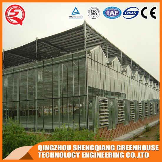 China Commercial Vegetable/ Garden Toughened Glass Greenhouse pictures & photos