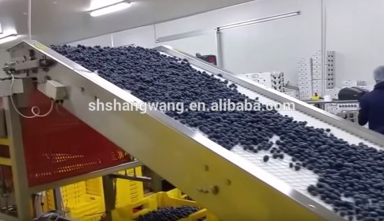 Fresh Blueberry Juice Production Line/Blueberry Juice Filling Machinery pictures & photos