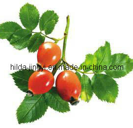 High Quality Natural Rose Hip Extract pictures & photos