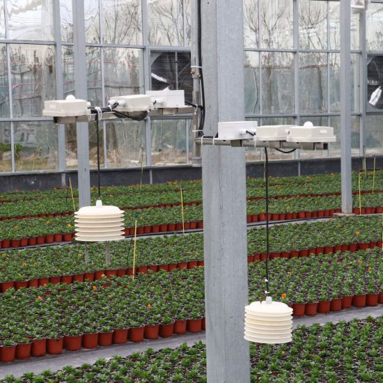 Commercial Hydroponic Growing Systems Film Greenhouse for Sale